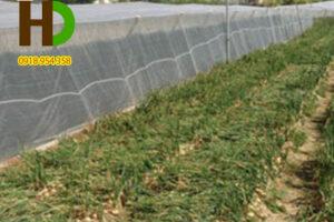 Lưới chống côn trùng trồng rau sạch