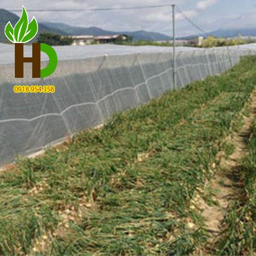 Lưới nhựa chống côn trùng trồng rau sạch