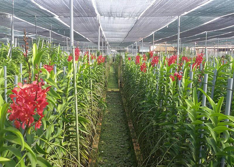 Lưới Thái trồng lan, che vườn lan