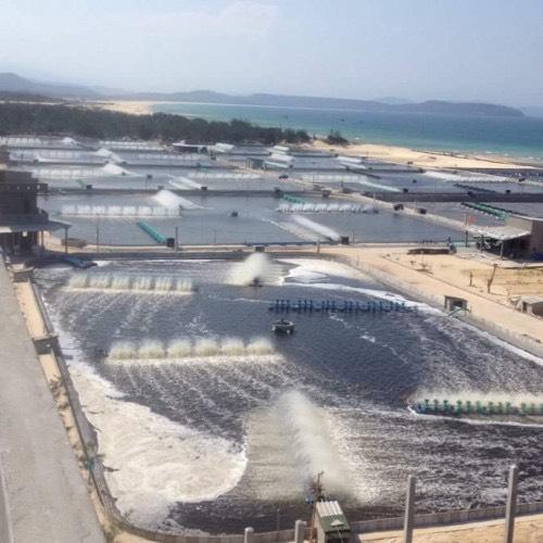 Màng chống thấm HDPE lót hồ nuôi tôm