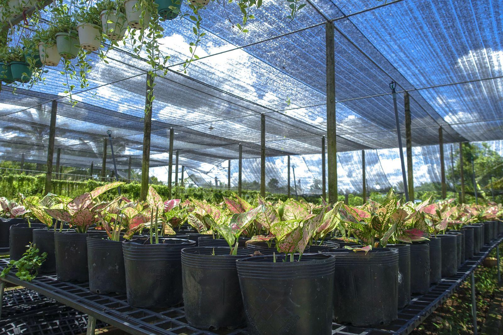 cần chọn lưới che lan phù hợp với từng loại hoa phong lan